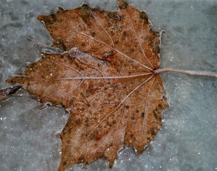 Fruit Bat's perfect winter pic... frost on glass