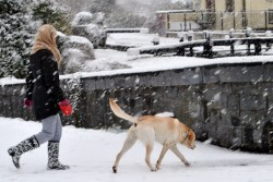 Snow in late March... yes, the dog still needs walking! That's the 16th Lock on the Royal Canal in the background...