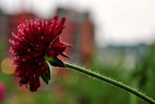 Delicate flower against the harsh backdrop of urban walls...