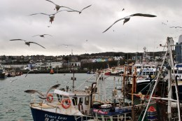 Howth village as seen from the West Pier, across the harbour... seagull territory!