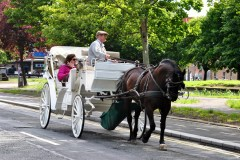 Joy ride around St Stephens Green... don't know if the horse likes this joy!