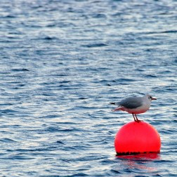 Bird on bouy...