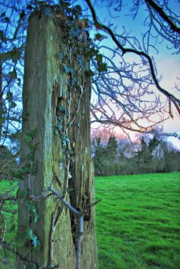 Fence POST...