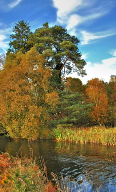 Royal Canal autumn colour - HDR