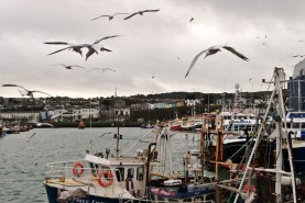 Seagulls at Howth's West Pier... and the odd fishing boat...
