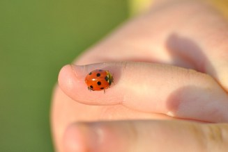 WWW and ladybird...