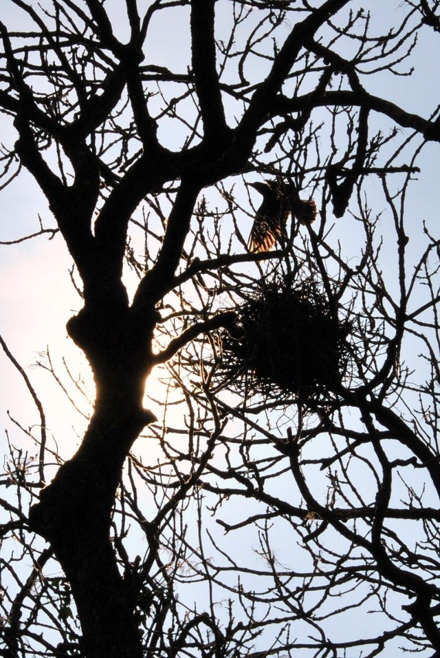 The raven and the nest!