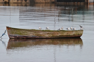 Resting place... gulls waiting... for what?