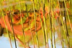 Garden pond abstract