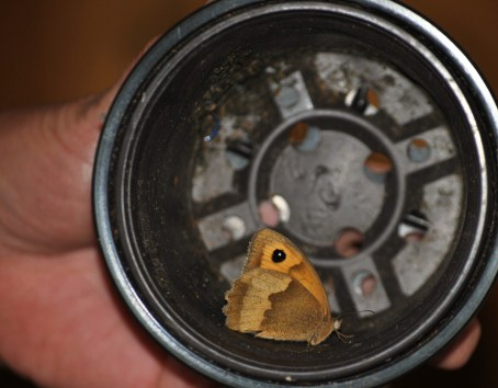 Storm in a tea cup? No... butterfly in a plant pot!