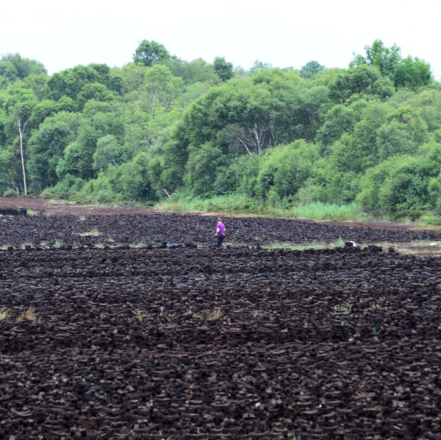On the verges of the peat harvesting area... what could be found on the edge of this black wilderness??