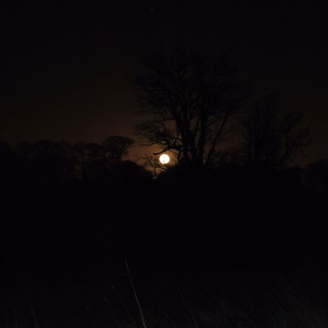 Full moon rising... silhouetting the winter shapes...