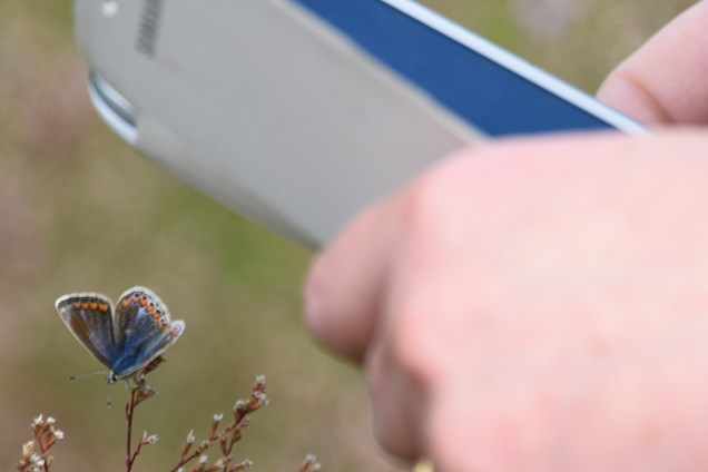 Pick your target! A Common Blue as sen through my lens... in the company of the GLW... as seen through her phone's lens!