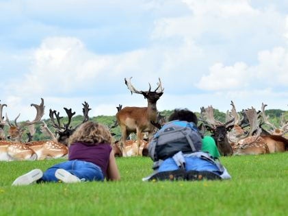 Who's watchin who?? Deer in Phoenix Park, Dublin, Ireland