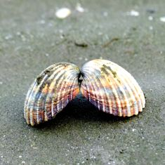 Shells on Sandymount Beach...