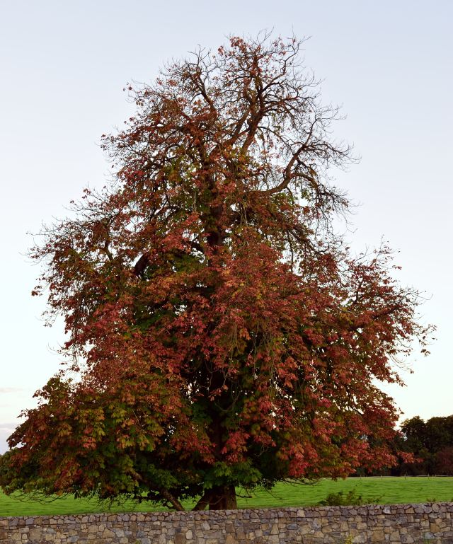 Autumn tree... happy in all its glory!!