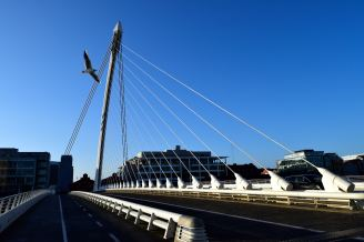The bird and the bridge, the seagull crosses in front of Dublin's Samuel Beckett Bridge