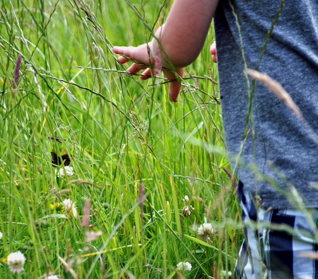 The summer sessions! Butterfly hunting!!