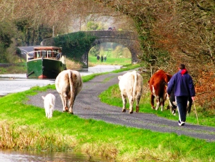 Sunday afternoon bliss! The Rambler makes her way along Ireland's Royal Canal