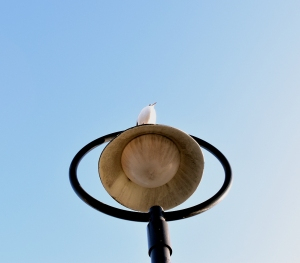 A bird on the light is as good as a light bird? Maybe... maybe not!!