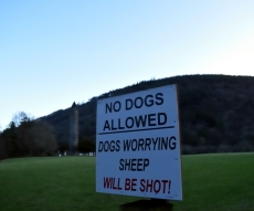 Dogs at Glendalough? Never!!