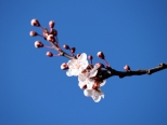 pink and blue... signs of spring? Let's hope!!