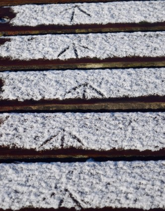 Footprints in the snow... moorhen's tracks uncovered?