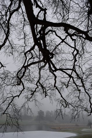 Winter view... the tree just captivates the soul, don't you think??
