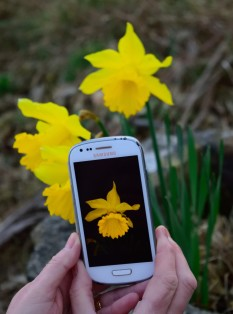 Happy phone snapper fun! GLW and the daffs!