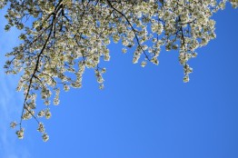 Happy April spring memories?? yep... the sun shone... the clouds stayed away!! ;-)