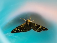 Butterfly rescue... blue cup to the fore...