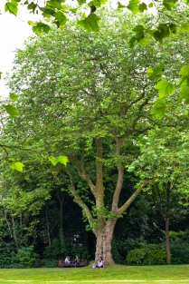 Sitting beneath a tree in Dublin's Merrion Square... inspiration personified!