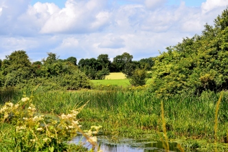 The Royal Canal landscapes... serene! Between the 17th Lock and Cloncurries... idyllic, to say the least!