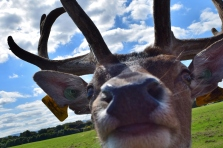 An eye to eye? That's all I need!