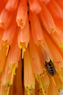 Orange... spectacular bee paradise!!