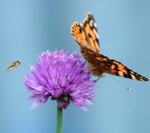 Blue... bee and butterfly! Happy fun!