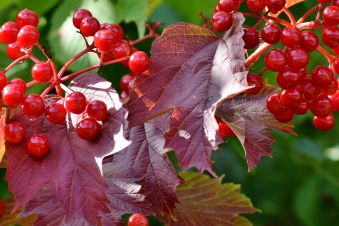Red... autumn red berries!!