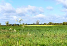 Spring glory... only a distant memory now!