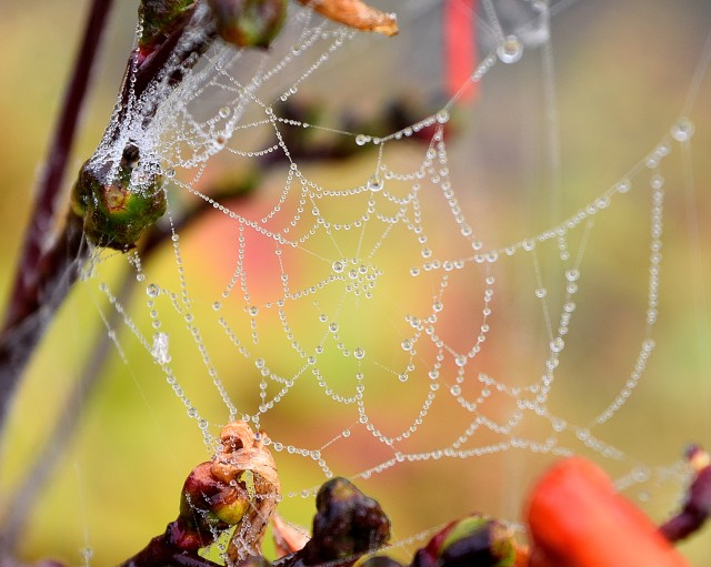 Spiders weave, raindrops add sparkling jewels!