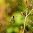 Spider spider... fun in the sun after the mist!! ;-)