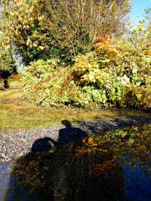 Autumn shadows... sprawling below cold feet!