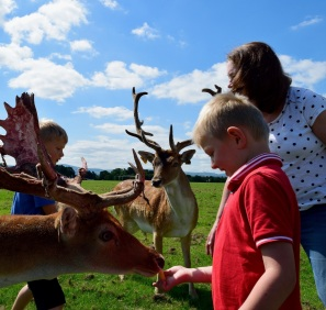Dublin's Phoenix Park... a happy place for deer and humans!! ;-)