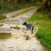Pepsi in the puddle... what a treat!!