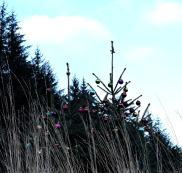 Decorated Christmas trees out in the wilds... as seen in the Wicklow Mountains - Ireland