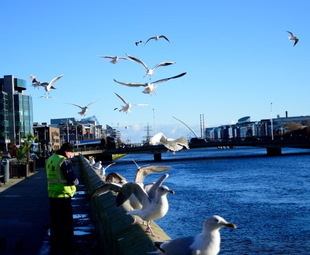 Feeding seagulls and pigeons along Dublin's Liffey... great lunchtime endeavour!