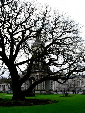 Winter green... bare tree hiding the Campinile at Dublin's Trinity College...