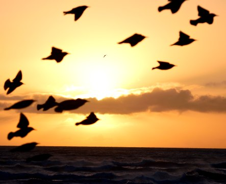 Starlings photo bomb my sunrise snap! Bad birds!!