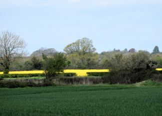 Man made spring beauty... manipulating the earth to deliver crops! Early May, 2016 Co Kildare, Ireland