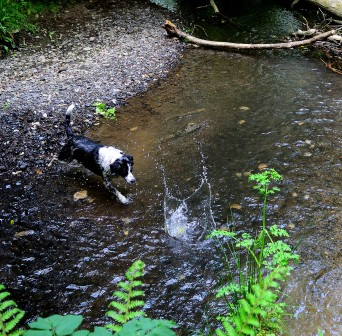 Pepsi diving in after the ball! FUN!