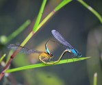 Damselfly delight? Who knows??
